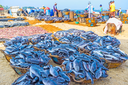 triggerfish: NEGOMBO, SRI LANKA - NOVEMBER 25, 2016: The fishing port and fish market are the busiest places on coast - here fish is sorting, cutting, cleaning, drying and loading to transfer, on November 25 in Negombo. Editorial
