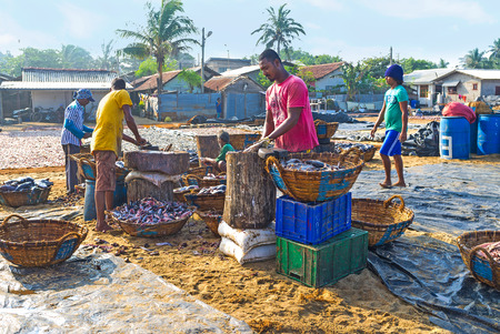 triggerfish: NEGOMBO, SRI LANKA - NOVEMBER 25, 2016: The beach next to the Main Fish Market occupied with fishing port, areas for fish cleaning, cutting and packing also located here, on November 25 in Negombo.