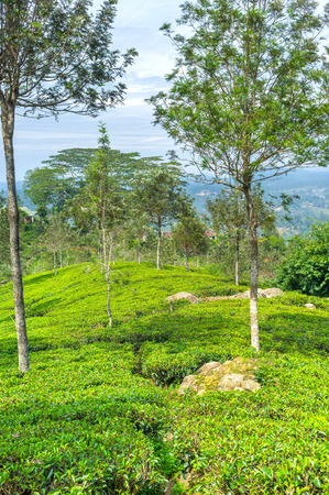 Traveling to the emerald green hills probably the most interesting voyage in the island, Sri Lanka Stock Photo