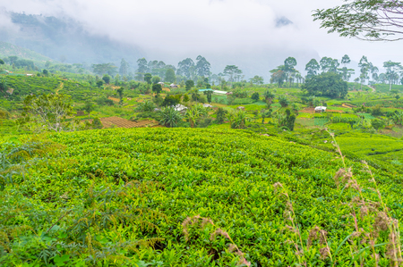 Sri Lanka boasts large amount of tea plantations located in scenic highlands, so tourists can choose many day tours to this region.