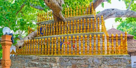 základní: Strom Bodhi je jedním ze základních prvků buddhistických chrámů, středověký komplex v Padeniji má starý a rozšiřující Bo strom, Srí Lanka.
