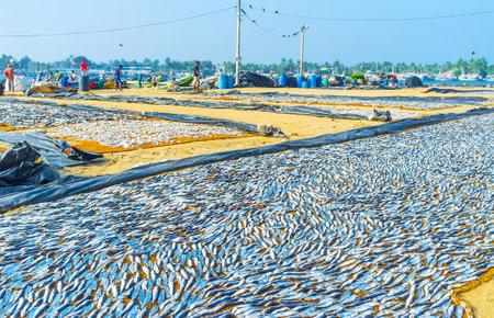 NEGOMBO, SRI LANKA - NOVEMBER 25, 2016: The ffishing port is popular tourist place, here  discover the process of fish sundry, on November 25 in Negombo.