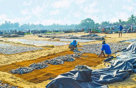 NEGOMBO, SRI LANKA - NOVEMBER 25, 2016: The fishing port is full of fishermen and people, working in drying fish process, on November 25 in Negombo.