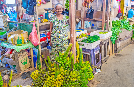 COLOMBO, SRI LANKA - DECEMBER 6, 2016: The aged banana seller at the branches of green bananas in Fose Market in Pettah, on December 6 in Colombo.