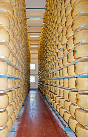 PARMA, ITALY - APRIL 24, 2012: The antiseismic shelving with Grana type cheese in maturation room of Caseificio la Traversetolese factory, on April 24 in Parma.