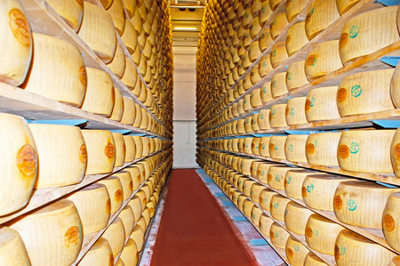 manufactory: PARMA, ITALY - APRIL 24, 2012: The row between the antiseismic shelving with marked wheels of Grana type cheese in maturation room of Caseificio la Traversetolese factory, on April 24 in Parma.