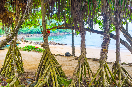 The view on the coast of Jungle Beach through the palms roots, Unawatuna, Sri Lanka.