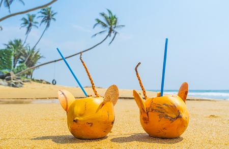 The coconut water is the best beverage on the tropic beach, especially from the funny mice glasses, made of coconuts, Boosa, Sri Lanka.