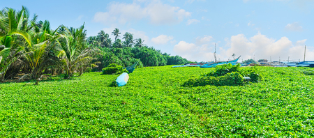 The green meadow next to the Dodanduwa harbor separates the oceans shore and the fishing village, located behind the palms, Hikkaduwa, Sri Lanka.