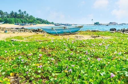 La vista en el puerto de Dodanduwa detrás del prado verde, cubierto con las flores brillantes de las plantas de la playa, Hikkaduwa, Sri Lanka. Foto de archivo