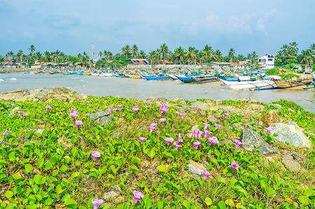 The view on the long row of oruwa canoes in Kumarakanda fishery harbor from the pier, covered with sandy plants, Hikkaduwa, Sri Lanka.