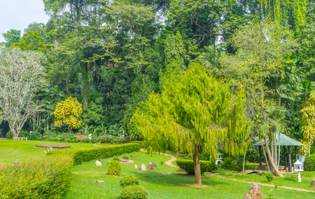 High trees in Royal Botanical Garden create cool shadow, so needed in tropic island, Sri Lanka