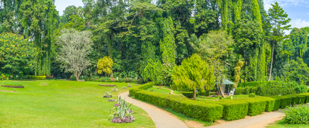 All kinds of vegetation of the island are presented in different districts of Royal Botanical Garden in Kandy, Sri Lanka