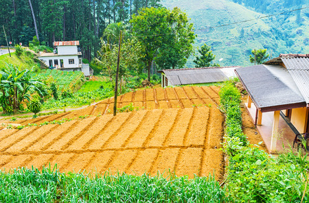 ceylon: The plowed lands of the small kitchen garden of Sri Lankan farmers, Pusselawa. Editorial