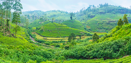 Mountains of Sri Lanka covered with green carpet of tea plants, the main export crop of the country, Pusselawa. Stock Photo