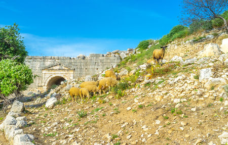 sidewall: Hills of Letoon archaeological site are the best place for grazing sheep, Turkey Stock Photo