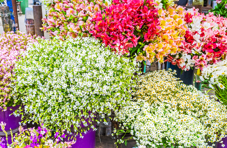 anton: The bouquets of colorful alstroemeria, white small chamomiles and other flowers in Flower Market in Tbilisi, Georgia.