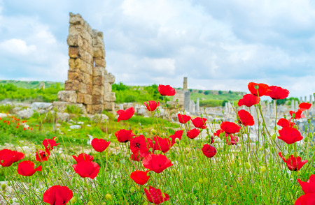 The ruins of Perge behind the poppys, growing on the meadow, Antalya, Turkey.