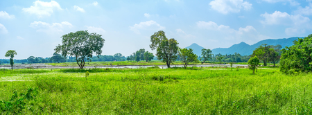 The beautiful panoramic landscape with flooded paddy fields and mountaind on background, Uva Province, Sri Lanka Stock Photo