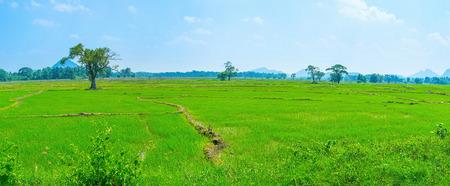 Green irrigated rise fields make amazing view of Sri Lankan landscape Stock Photo