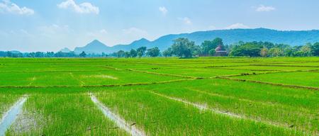 Damatamal Vihara surrounded with beautiful green rise fields, Okkampitiya, Sri Lanka