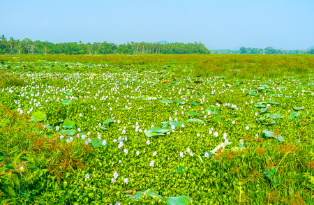 The view on huge freshwater swamp, located in Uva province of Sri Lanka Stock Photo