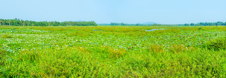 Freshwater swamps of Sri Lanka boasts unique variety of flora and fauna and creates amazing landscapes Stock Photo
