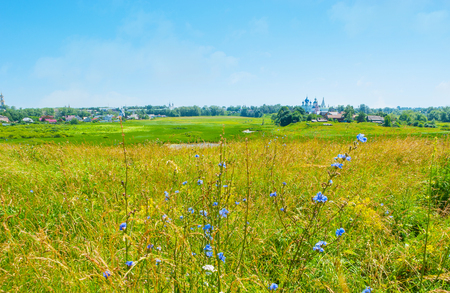 The Ilinskiy meadow with tall grass and bright blue wildflowers, Suzdal, Russia.