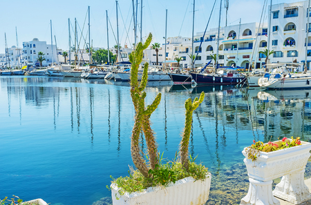 The cactus grows in pot on embankment of yacht port of Monastir, Tunisia.