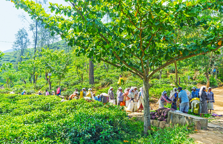 ELLA, SRI LANKA - DECEMBER 1, 2016: The  long line of tea pickers, came to weigh picked tea leaves after the hard work, on December 1 in Ella.
