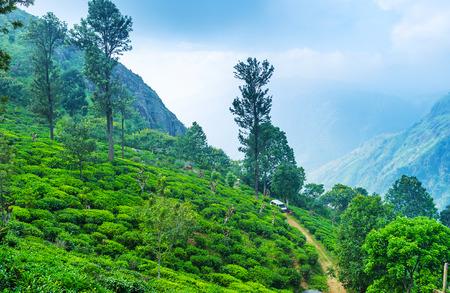 The morning fog over the tea plantations and mountains of Ella, Sri Lanka.