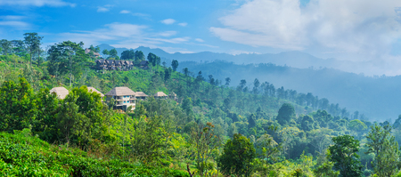 Panoramic landscape of Ella mountain slopes, covered with lush green forests and tea plantations, Sri Lanka.