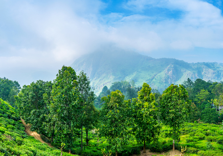 The heavy clouds cover the Ella Rock in the early morning, Sri Lanka. Stock Photo
