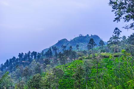 The foggy evening in mountains of Sri Lanka, the Little Adams Peak is seen behind the tea plantations of Ella.