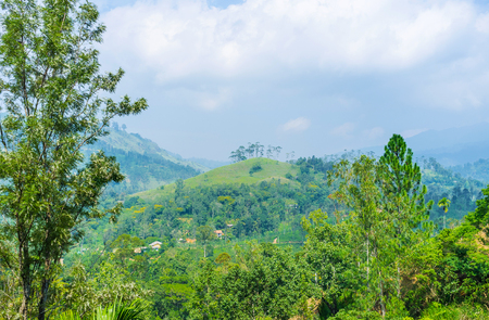 The walk among the lush greenery of the rainforest with a view on hills and mountains of Ella, Sri Lanka.