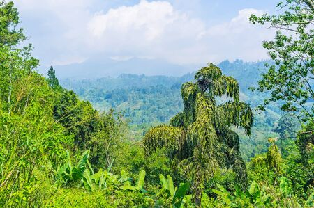 The rainforest on the slope with a view on cloudy mountains on the background, Damodara, Ella, Sri Lanka.