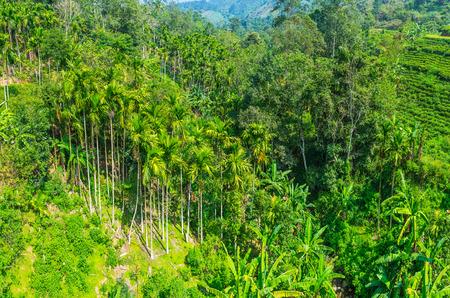 The Nine Arch Bridge overlooks the valley, covered with lush palm gardens, neighboring with tea plants on the mountain slopes, Damodara, Ella, Sri Lanka.