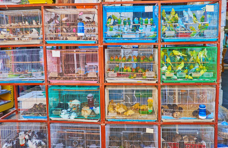 Multitude of cages with colored noisy pet birds - parrots, lovebirds, canaries and other species, popular among Qataris, Souq Waqif, Doha, Qatar. Banque d'images - 99958801