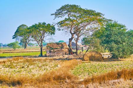 ミャンマーのバゴ地方の農地の中のいかれのある木の下に竹とヤシの木を織った小さな避難所。