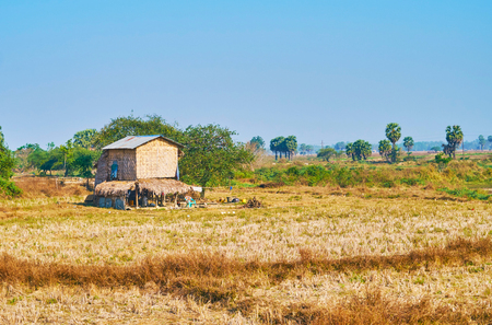 The small farmers stilt house of woven bamboo on stubble field with green palms on background, Bago Region, Myanmar.