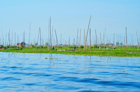 Burmese villagers work on their floating farm, located on Inle Lake, Myanmar. Stock Photo