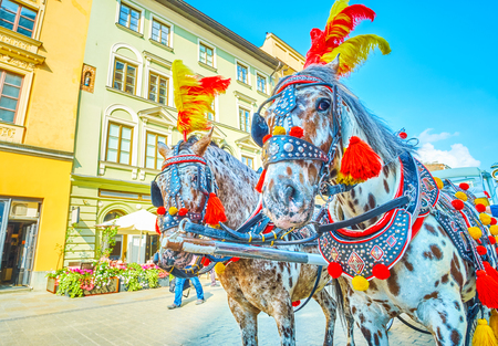 The pair of harnessed horses decorated with colorful feathers and pom-poms, Krakow, Poland 版權商用圖片