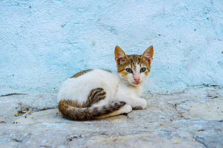 A small feral kitten sits against the blue house wall in Sousse Medina, Tunisia.
