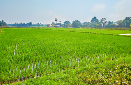The plain landscape of Ava farmlands, juicy green paddy-field, surrounded by tropic forests and ancient Buddhist shrines, Myanmar.