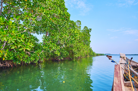 Observe the unique ecosystem of red mangrove forest on Kangy river at the Chaung Tha tourist village, Myanmar. 스톡 콘텐츠