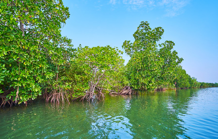 The brackish waters of Kangy river at the Bengal Bay are home for red mangrove forests, Chaung Tha, Myanmar.