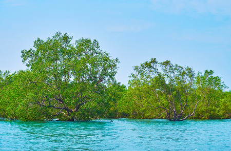 The daily trips to mangroves on Kangy river are popular among the tourists, visiting resorts and fishing villages on Bay of Bengal, such as Chaung Tha or Ngwesaung, Myanmar.