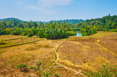The hilly landscape with fields, jungle and mangrove forests along the banks of Kangy river, Chaung Tha zone, Myanmar.