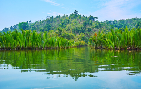 The mangrove forest of nipa palms with water corridor in the middle, Kangy river, Chaung Tha zone, Myanmar.