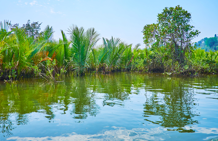 Kangy river kayak tour is the nice choice to watch diverse tropical vegetation of mangrove forests, Chaung Tha zone, Myanmar.